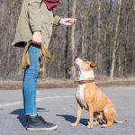 adestramiento canino perro