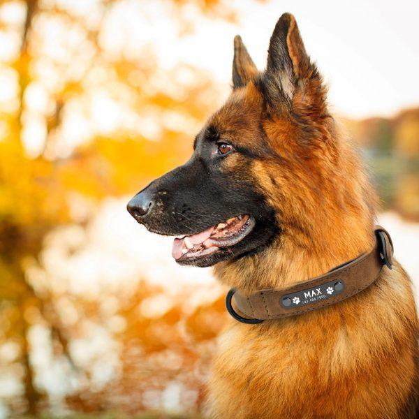 Collar personalizado con nombre + correa para perro 5