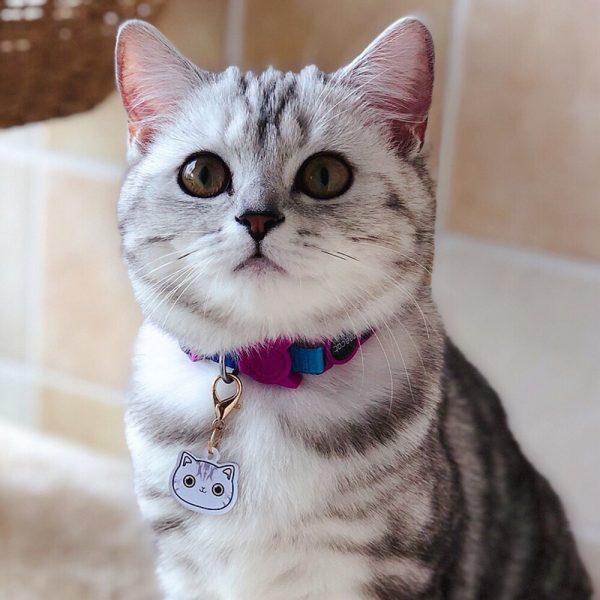 Placa identificativa para gato con nombre y dibujo personalizado + 1 de regalo 6