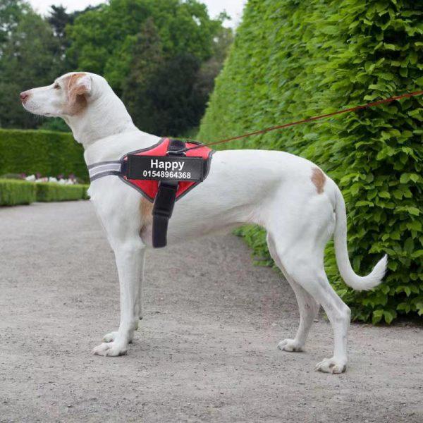Arnés de perro anti tirones con nombre y teléfono, transpirable y reflectante 2