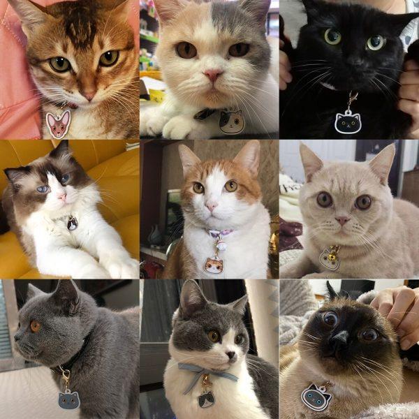 Placa identificativa para gato con nombre y dibujo personalizado + 1 de regalo 2