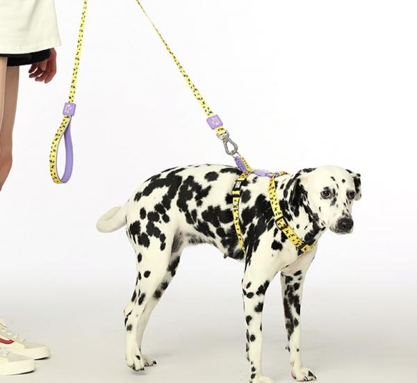 Correa de perro para mascotas, correa de perro estampada, cuerda pequeña y mediana para perros, gato, cachorro, 120 cm, suave, transpirable, Chihuahua, cables para caminar 6