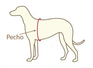 medir arnes perro