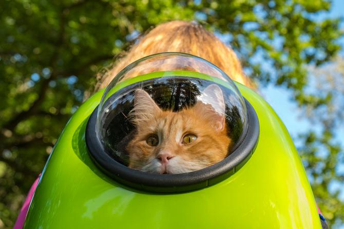 mejor mochila transportin para gato y perro cachorro