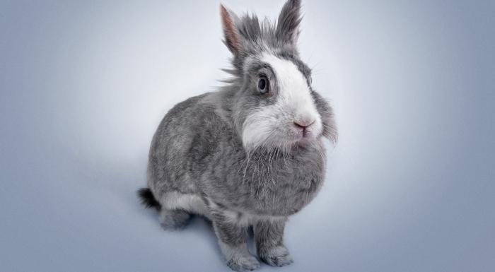 productos para conejos y otras mascotas