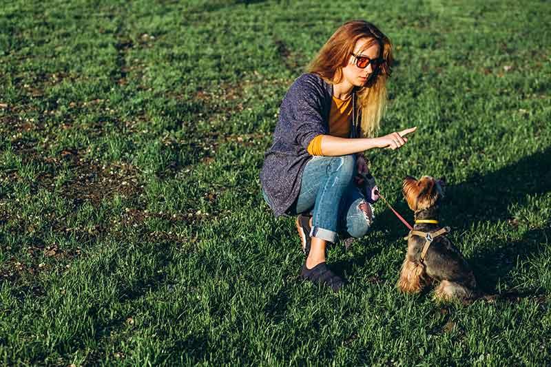 Cómo hacer que tu perro te obedezca