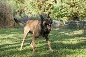 eliminar agresividad perro