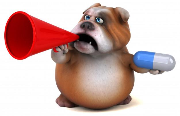 Diabetes canina perro